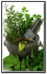 herba timi